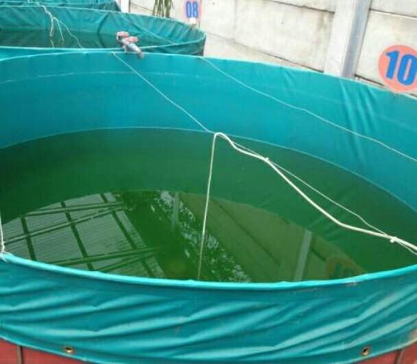kolam terpal_2