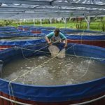 Jual Filter Air dan Kolam Terpal Ikan di Jakarta Selatan | Hubungi 087878202527|